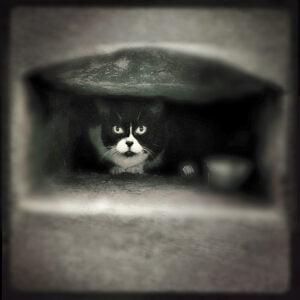 Mystery Cat #20 by Robin Davis